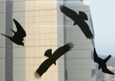 美고층빌딩에 충돌, 죽는 새 6억마리.jpg
