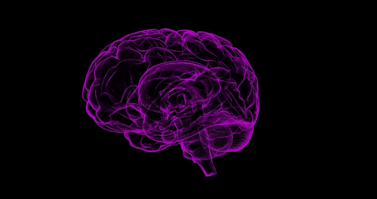 brain-1787622_1280.jpg